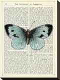Blue Butterfly Stretched Canvas Print by Marion Mcconaghie