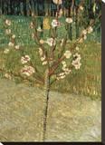 Almond Tree in Blossom, 1888 Reproduction transférée sur toile par Vincent van Gogh