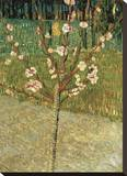 Almond Tree in Blossom, 1888 Stretched Canvas Print by Vincent van Gogh