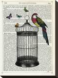 Bird Cage and Parrot Stretched Canvas Print by Marion Mcconaghie