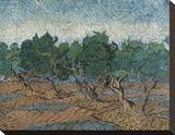 Olive Grove, 1889 Stretched Canvas Print by Vincent van Gogh