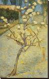 Small Pear Tree in Blossom, 1888 Stretched Canvas Print by Vincent van Gogh