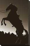 Stallion Silhouette Stretched Canvas Print by Barry Hart