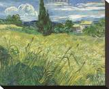 Green Field, 1889 Stretched Canvas Print by Vincent van Gogh