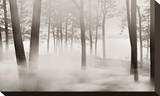 Woods in Mist Stretched Canvas Print by James McLoughlin