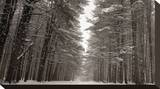 Road Through the Pines Stretched Canvas Print by James McLoughlin