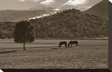Mancos Morning Stretched Canvas Print by Barry Hart