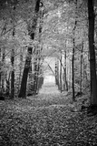 Berkshires Near Appalachian Trail Black and White Photo