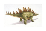 Palaeozoology, Jurassic Period, Dinosaurs, Stegosaurus, Illustration by Nick Pike Prints