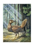 Reconstruction, Long-Tailed, Seed-Eating Bird Fossil, Illustration Poster