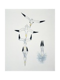 Close-Up of a Northern Gannet Diving in Water Prints