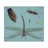 Prehistoric Insects, Illustration Posters