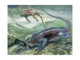 Marine Iguana Swimming Underwater (Amblyrhynchus Cristatus) Posters