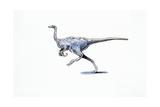 Illustration of Archaeornithomimus Poster