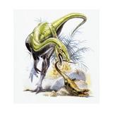 Illustration of Compsognathus Hunting Kunstdruck