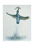 Close-Up of a Common Kingfisher Gripping a Fish (Alcedo Atthis) Prints
