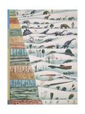 Illustration Representing Evolution of Organisms with Correlation to Geologic Eras Art