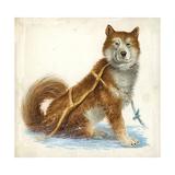 Siberian Husky Dog Canis Lupus Familiaris, Illustration Posters