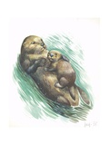 Sea Otter Enhydra Lutris Resting with Cub in Water, Illustration Prints
