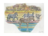 Mountain Zebras Equus Zebra, Illustration Print