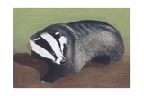 European Badger (Meles Meles), Illustration Prints