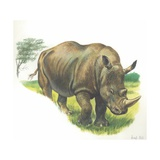 White Rhinoceros Ceratotherium Simum, Illustration Art