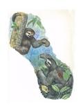 Pale-Throated Sloth Bradypus Tridactylus, Illustration Prints