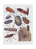 Close-Up of a Group of Coleoptera Insects Prints
