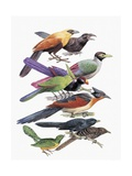 Close-Up of Cuckoos Perching on Branches Poster