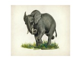 Elephant, Illustration Prints