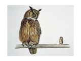 Close-Up of an Eurasian Eagle Owl Perching on a Branch with an Eurasian Pygmy Owl Kunst