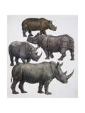 Various Animals of the Rhinoceros Family Posters