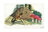 Southern Wood Ant or Horse Ant Formica Rufa, Illustration Prints