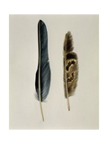 Close-Up of a Cinereous Vulture's Feather with an Owl's Feather Schilderij