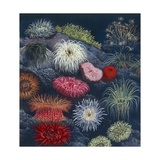 Sea Anemone, Illustration Prints