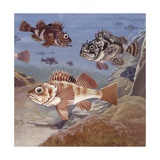 Fishes, Different Examples, Illustration Poster