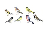 Finches and Sparrows Prints