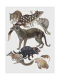 Close-Up of a Group of Marsupialia Mammals Poster