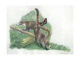 White-Nosed Coati Nasua Narica in Forest, Illustration Posters