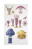 Large Group of Cnidarians, Illustration Print