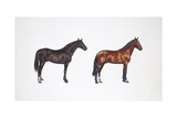 Kladruber Horse and Furioso-North Star Horse (Equus Caballus), Illustration Prints