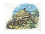 Iguana and Giant Tortoise, Illustration Posters