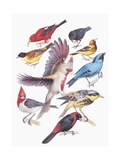 Close-Up of a Group of Birds Posters