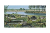 Freshwater Fishes in Pond, Illustration Prints
