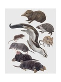 Close-Up of a Group of Insectivora Mammals Prints