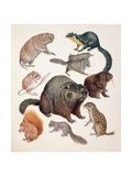 Close-Up of a Group of Squirrel Mammals Prints