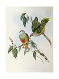 Illustration from John Gould's the Birds of Australia Posters