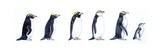 Pingouins Poster