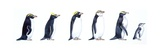 Pingwiny Plakat