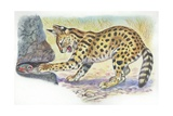 Serval Felis Serval Catching Reptile, Illustration Print